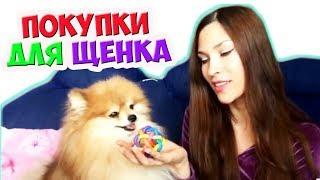 Покупки для собаки ✔️ Что купить Померанскому ШпИцУ