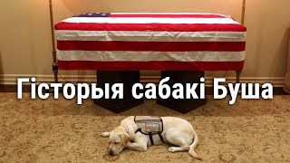САБАКА, ЯКІ СЛУЖЫЎ ПРЭЗЫДЭНТУ ЗША | История собаки, служившей президенту США