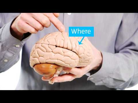 Your Amazing Brain - Dementia Explained - Alzheimer's Research UK