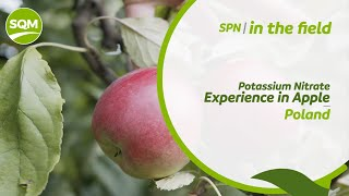 SPN in the Field, Apple Orchard – Poland