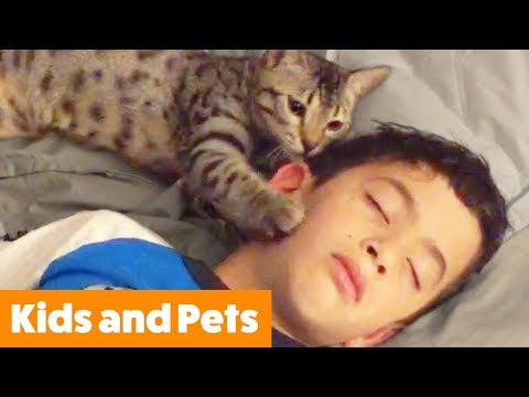 Funny Pets and Kids | Funny Pet Videos