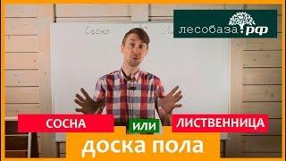 видео Полы из массива сибирской лиственницы