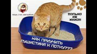 Как приучить пушистика к лотку (приют для котиков г. Снежинск)