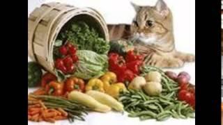 купить дешевый корм для кошек