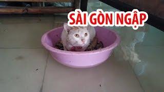 Mèo đi xuồng, gà đuối nước trong ngày Sài Gòn ngập