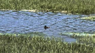 Водная жизнь - [15_26] Царство приливов