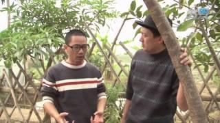 Hết đời Râu Quặp - Hài Chiến Thắng, Bình Trọng, Quang Tèo - Hài tết 2015 - Full HD