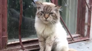 Помощь бездомной семье кошек, ч.4 - дедушка-кот Невский Маскарадный