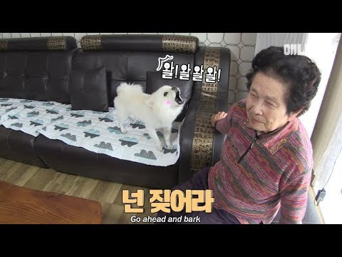 The dog only barks when it sees grandma