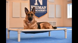 Olive (German Shepherd) Puppy Camp Dog Training Video Demonstration