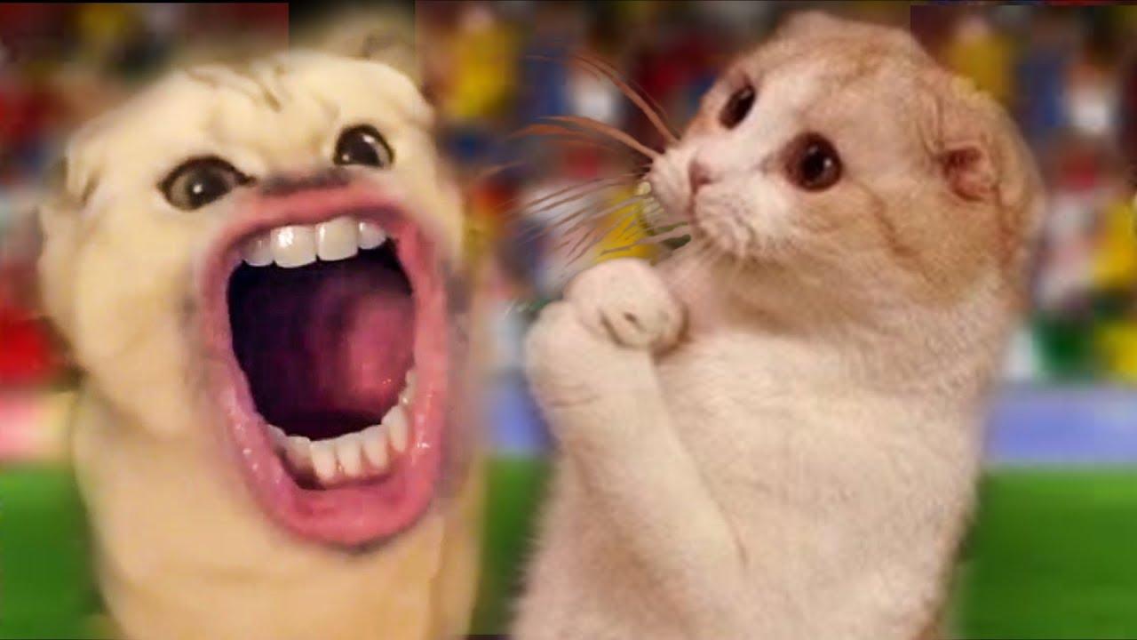 Flocosenii compilation faze comice cu pisici amuzante doza de ras Ep 42