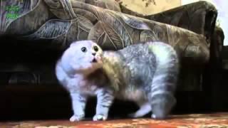 Смешные котята. Смотреть смешное видео про котят. Разговор кошек.