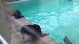 Sea Lions! Thumbnail