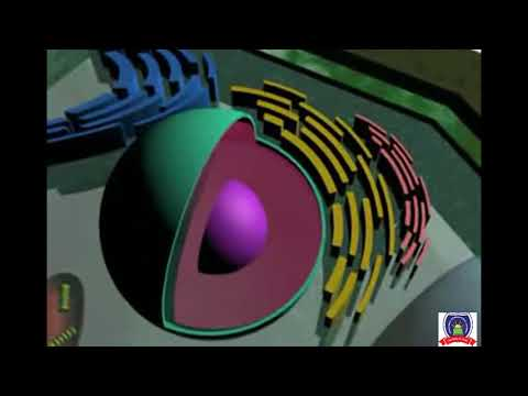 General Plant Cell Animated 3D Structure in Detail