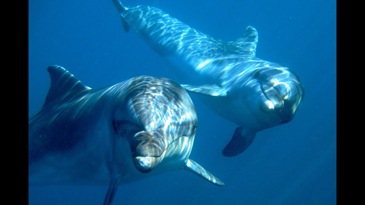 back to the blue captive dolphins return to the wild youtube