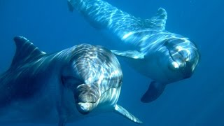 Back to the Blue - Captive Dolphins return to the Wild