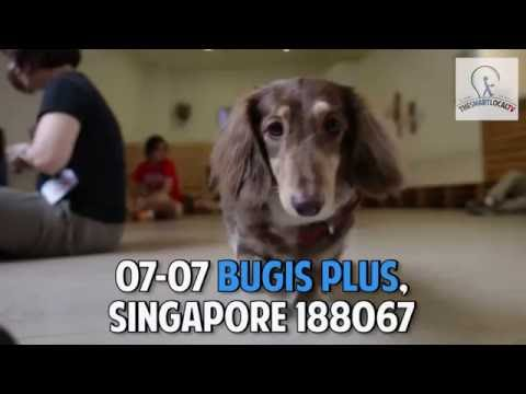 Singapore's FIRST Dog Petting Cafe - We Are The Furballs