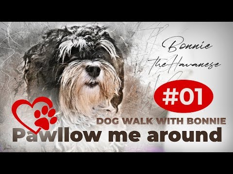 Pawllow me around with Bonnie. Eigentlich ein Test der Gopro Hero 5 black