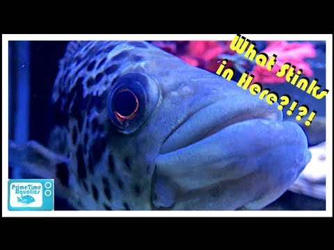 How To Fix A Smelly Fish Tank!