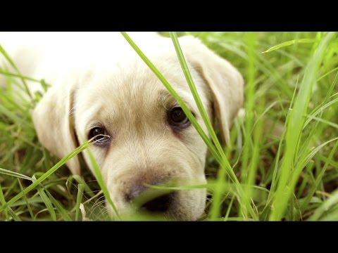 American Kennel Club Lists Most Popular Dog Breeds