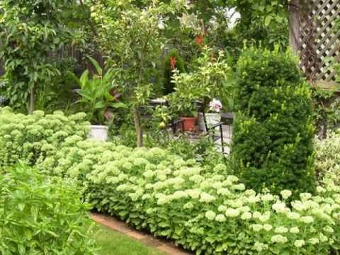 Growing a Sedum Hedge