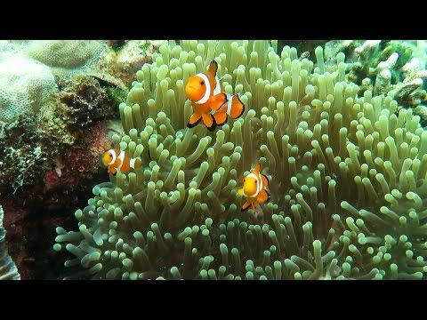 309 Posi Posi 17.10.  2015, Bangka Island, North Sulawesi, Indonesia