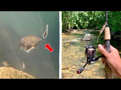 INCREDIBLE Creek Fishing in ULTRA CLEAR Water!!! (Underwater Footage)