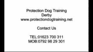 Protection Dog Training Derby
