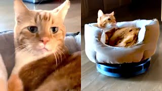Cats Don't Give A F*** | Funny Pet Videos