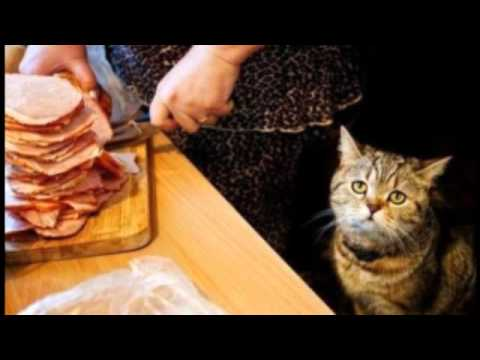 Песня про жирного кота скачать