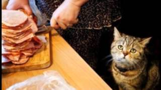 Детские песенки -- Песня про кота