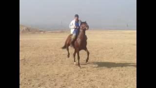 Ошский лошадь танцует под лезгинку