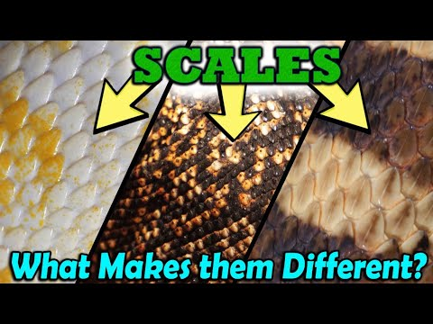 Snake Scales: Unique And... Mysterious? Magical? Who Knows...