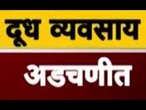 Dairy farmers in Maharashtra in trouble