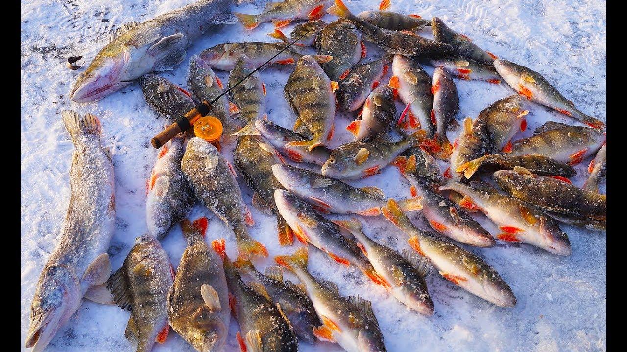 Ловля окуня на реках зимой