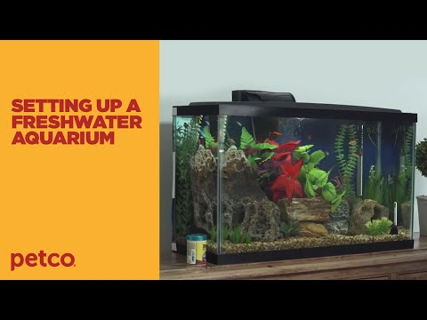 How To Setup A Fish Tank - Freshwater (Petco)