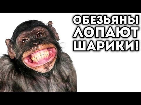 Crazy Monkey: играть в игровые автоматы Обезьянки