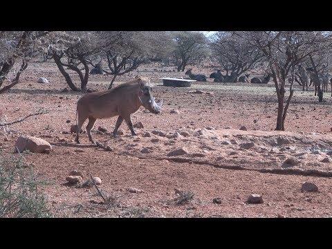 Trophy Warthog, Crossbow Hunter, 2014