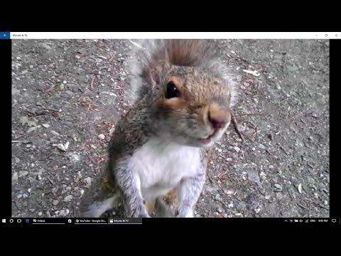 3d squirrel attack
