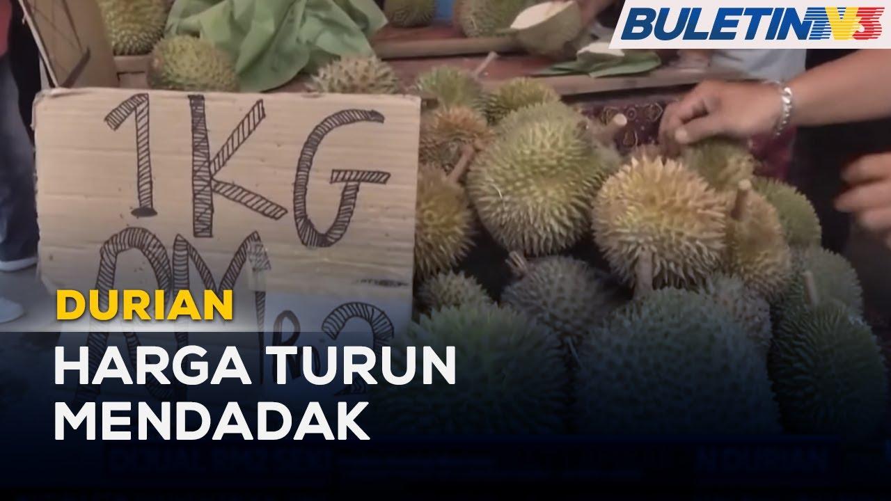 Download DURIAN | Dijual RM2 Sekilogram Akibat Lambakan Durian