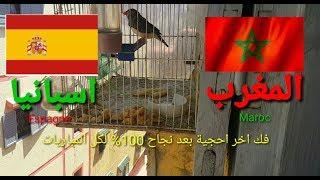 بعد نجاح كل تنبؤات العصفور المبارك يتوقع مبارة Maroc vs Espagne