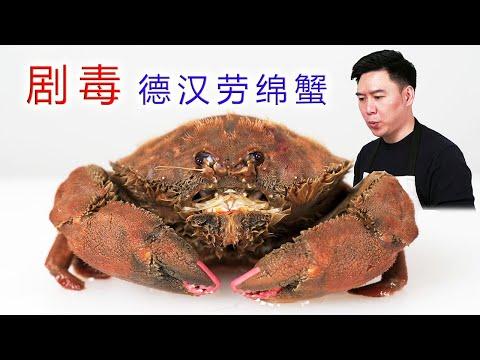 """含有剧毒的""""德汉劳绵蟹"""",超萌超可爱,可惜只能放生吃海鲜泡面!【小文哥吃吃吃】"""