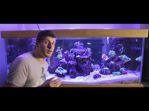 Part 2 Controlling phosphates In A Reef Aquarium