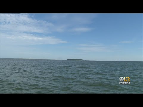 Experts Predict 'Dead Zone' Could Impact Chesapeake Bay Marine Life This Summer