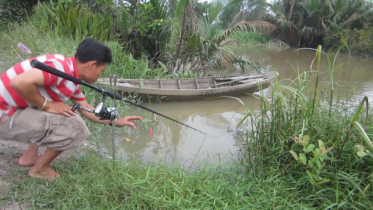 Câu cá tra sông , lên hàng đúng lúc trời mưa