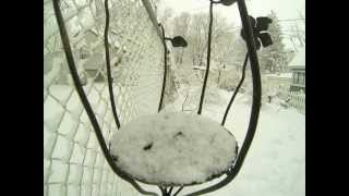 Bird Feeder Time Lapse In The Snow