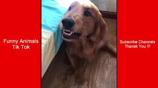 Funny Animals : Tik Tok Cute #4