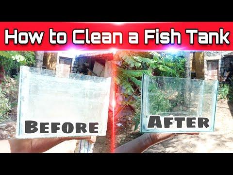 How to clean fish tank step by step | Betta fish tank, flowerhorn tank, Guppy fish tank