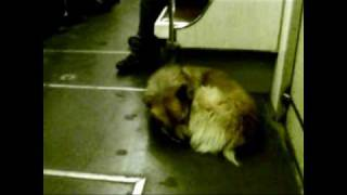 Moscow Metro Dogs.flv