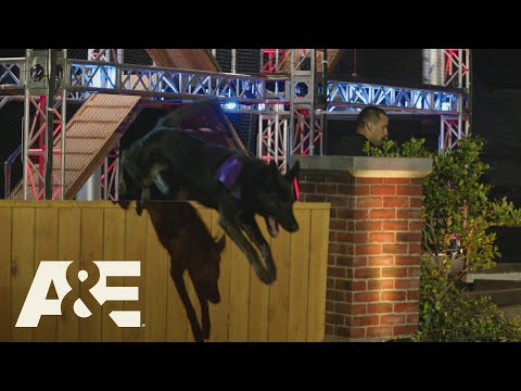Americas Top Dog: Walk Through the Obstacle Course with a Dog Safety Expert! (Season 1) | A&E